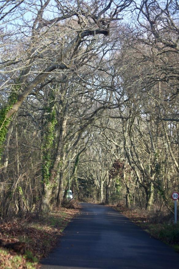 Platoff Road