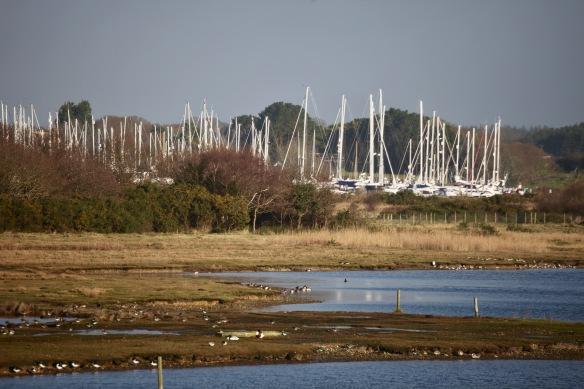 Lymington Marina from Nature reserve 1