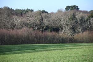 Trees on edge of field