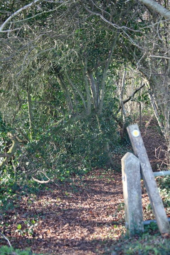 Honeylake Wood entrance