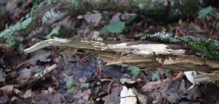 Branch fallen