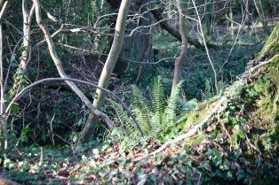 Ferns in wood