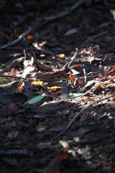 Sunlight on leaves 1