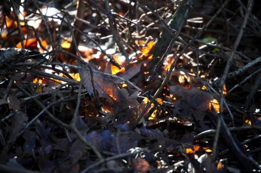 Sunlight on leaves 2