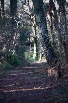 Honeylake Wood 4