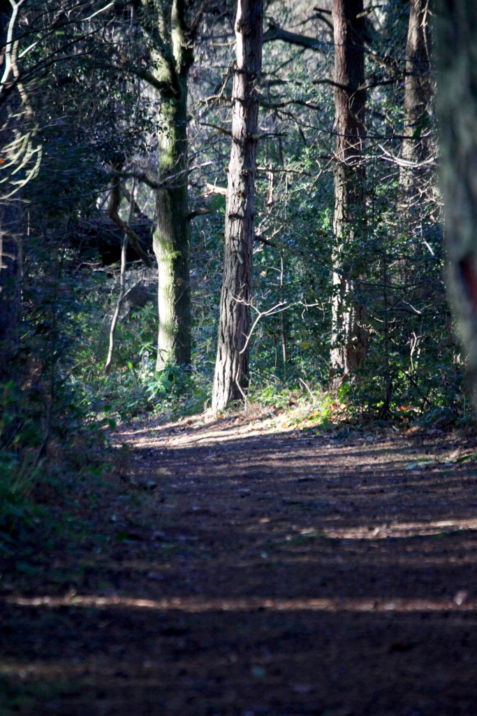 Honeylake Wood 5