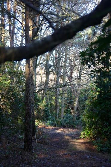 Honeylake Wood 7