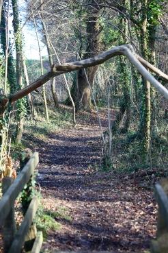 Honeylake Wood 8