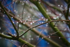 Raindrops on shrub