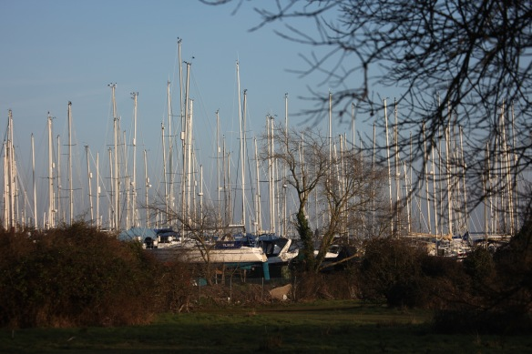 Yachts through trees