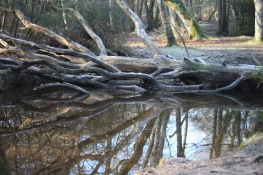 Fallen tree and reflections 2