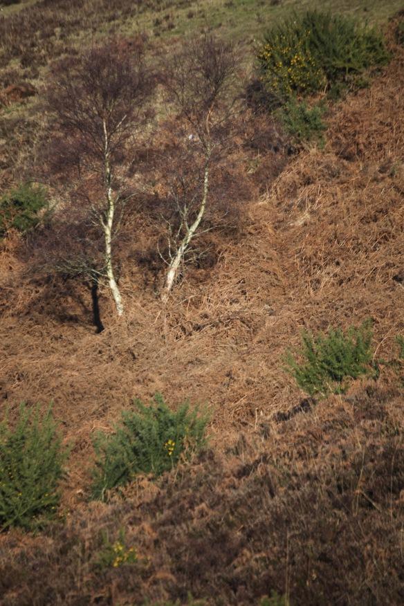 Hillside 1