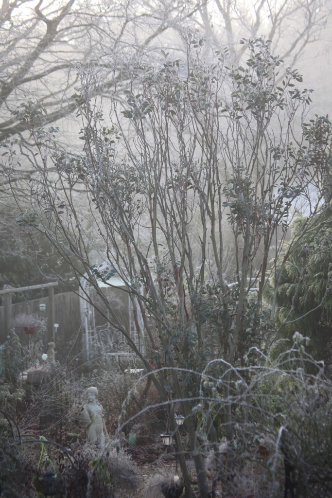 Frosted garden 1