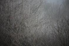 Tree in fog 1