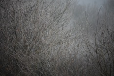 Tree in fog 1
