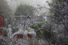 Frosted garden 2