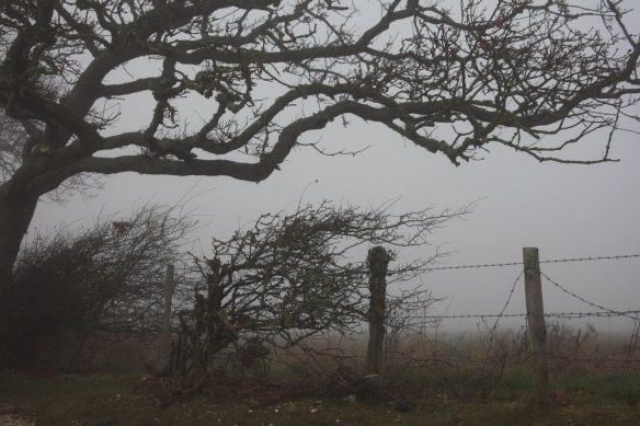 Trees and barbed wire in fog