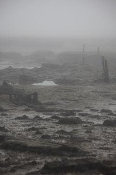 Low tide in fog 2