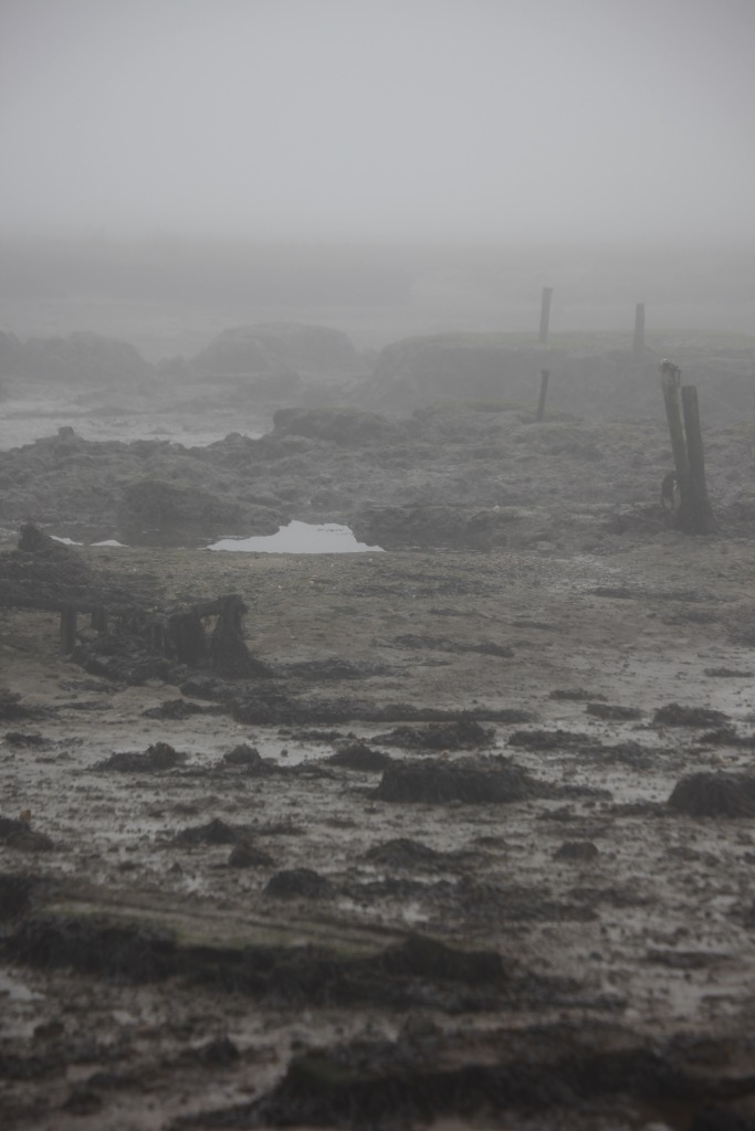 Low tide in fog 2