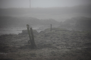 Low tide in fog