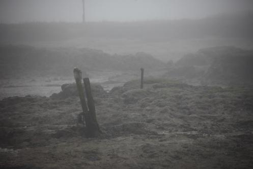 Low tide in fog