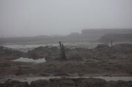 Low tide in fog 5