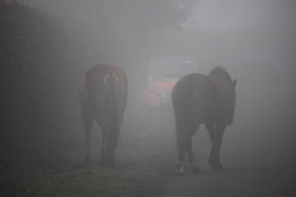 Ponies in fog 1