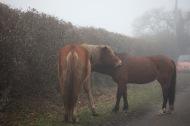 Ponies in fog 3