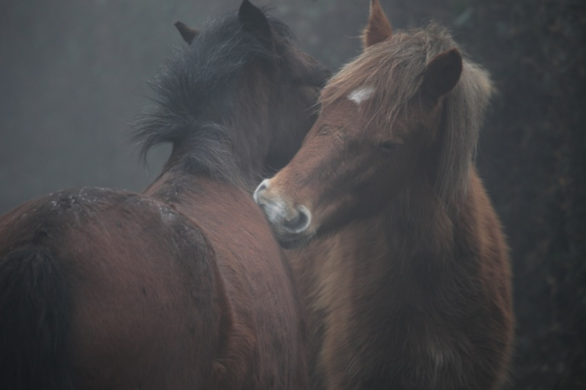 Ponies in fog 5