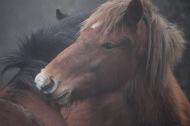 Ponies in fog 7