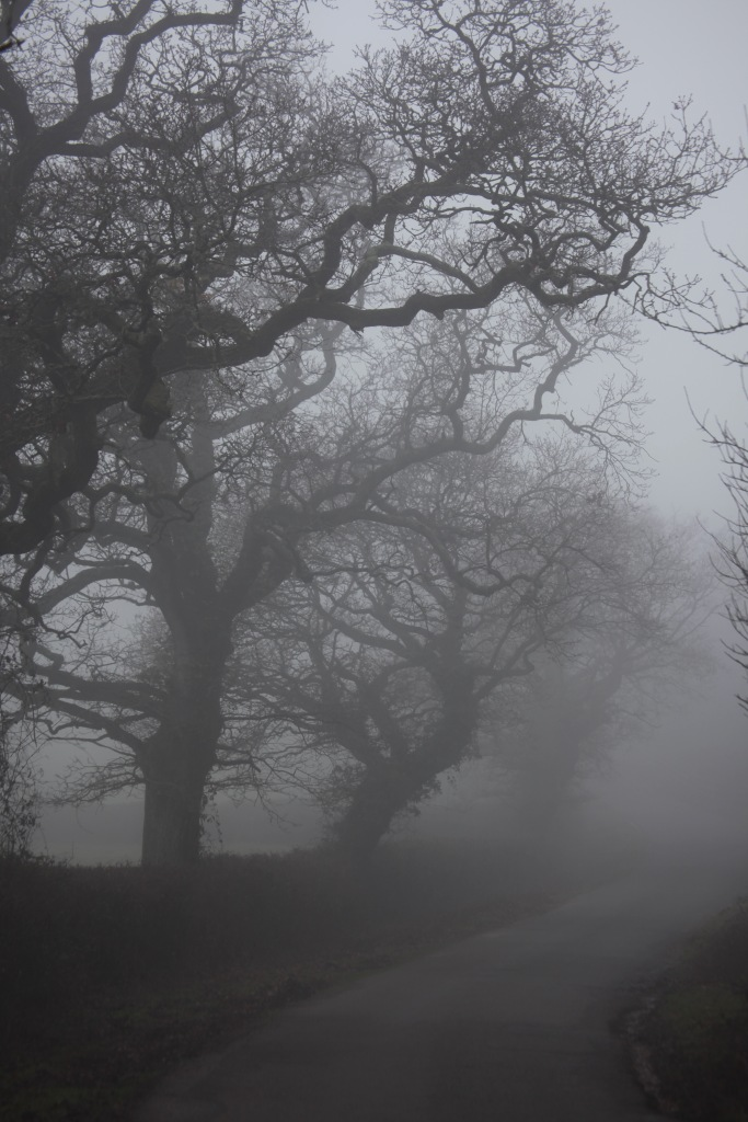 Trees in fog 3