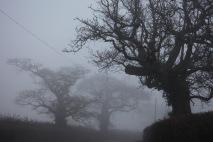 Trees in fog 4