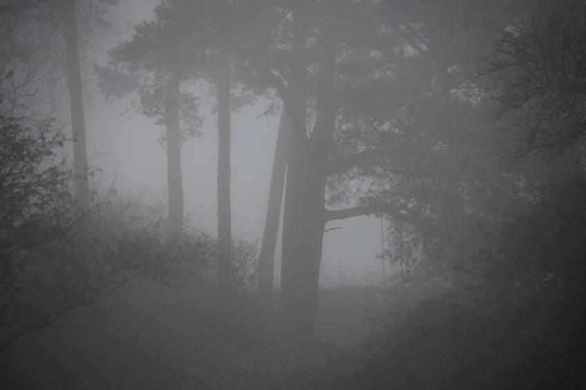 Trees in fog 5