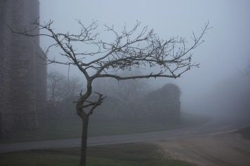 Tree by St Leonard's Grange in fog 1