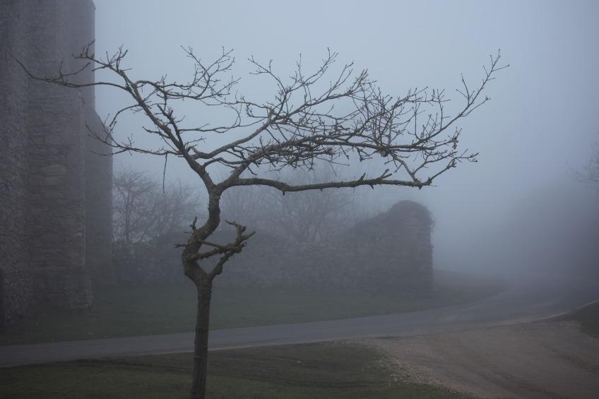 Tree by St Leonard's Grange in fog 1