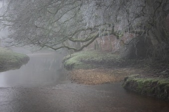 Stream and reflections in mist 1