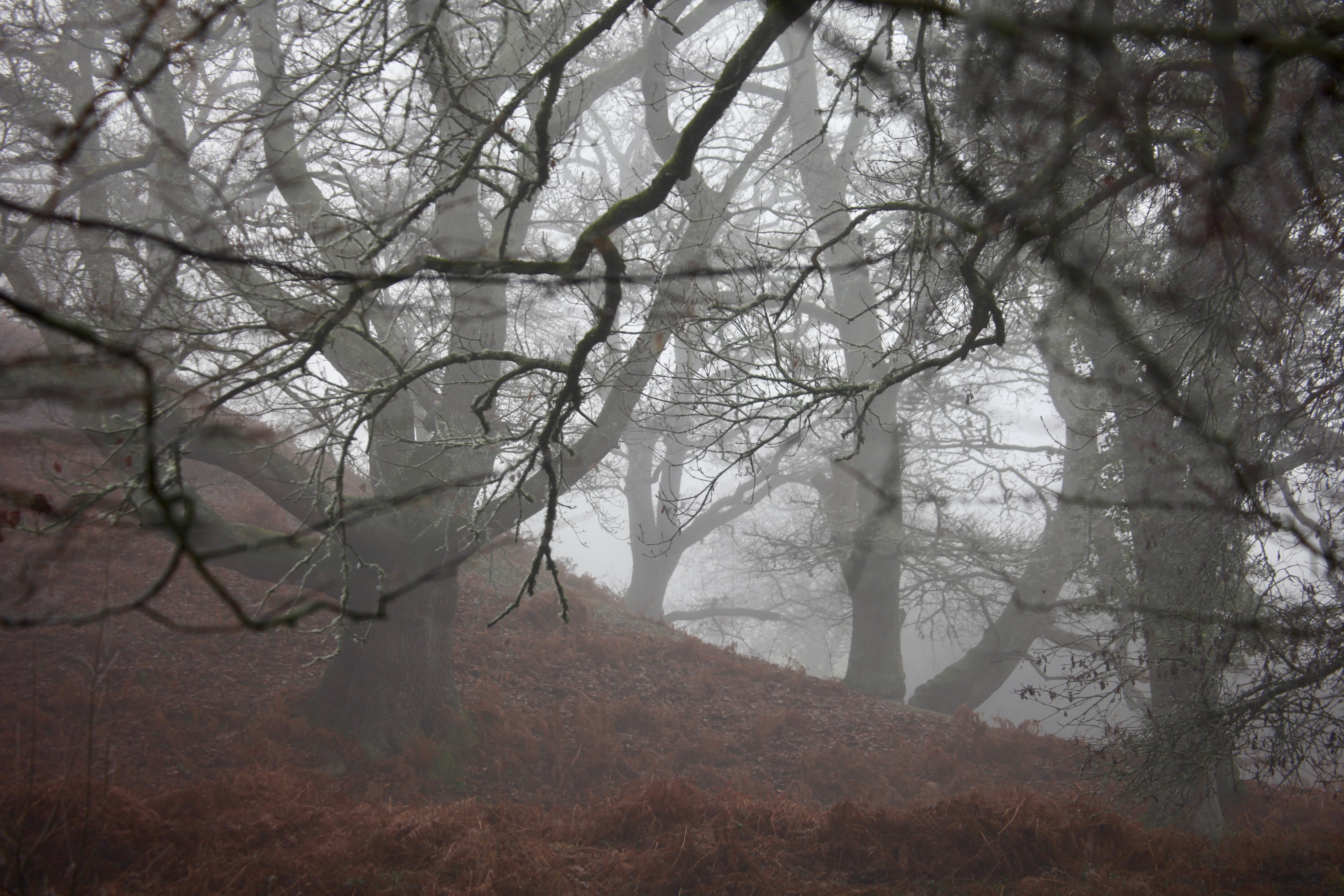 Trees and bracken in mist