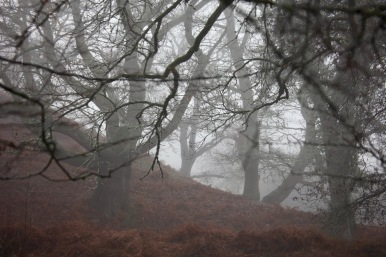 Trees and bracken in mist
