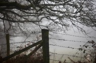 Barbed wire and tree