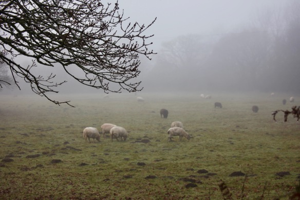 Sheep in mist 1