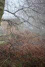 Raindrops on tree