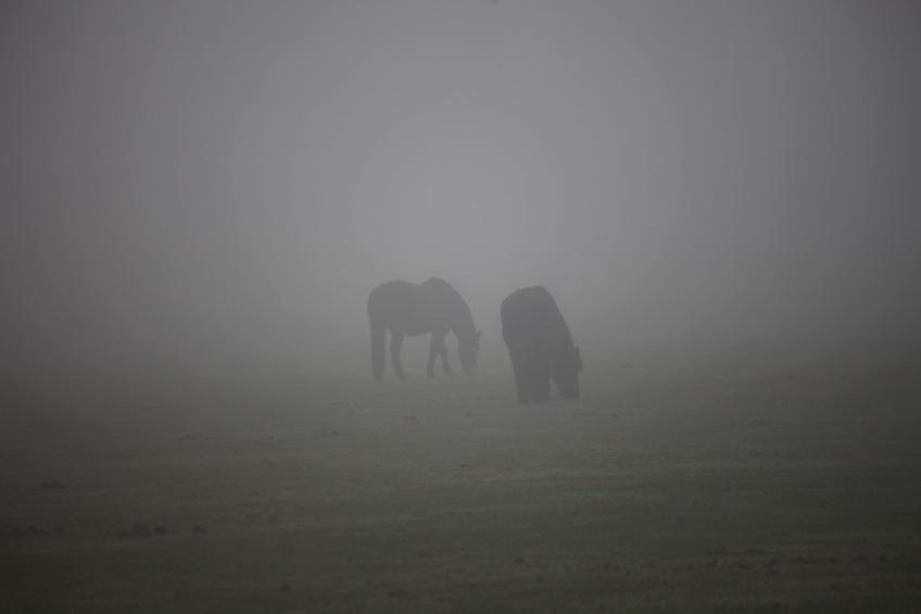 Ponies in mist