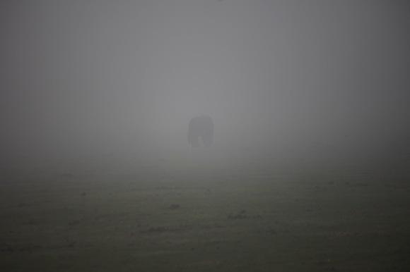 Pony in mist 1