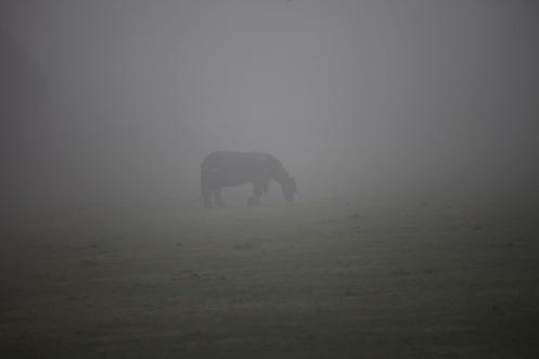 Pony in mist 2