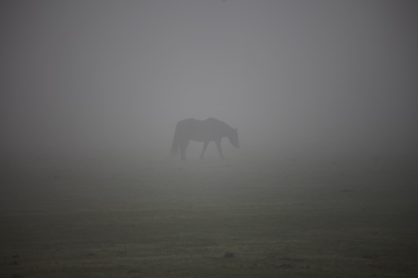 Pony in mist 3