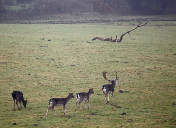 Stag and family