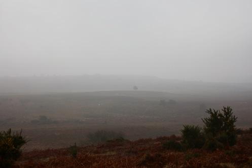 Misty moor 1