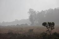Misty moor 3