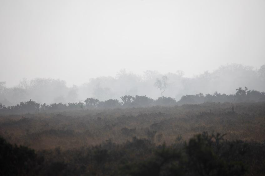 Misty moor 4