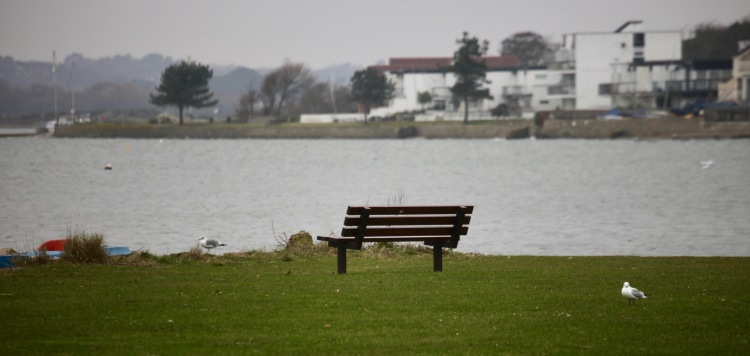 Bench and gulls